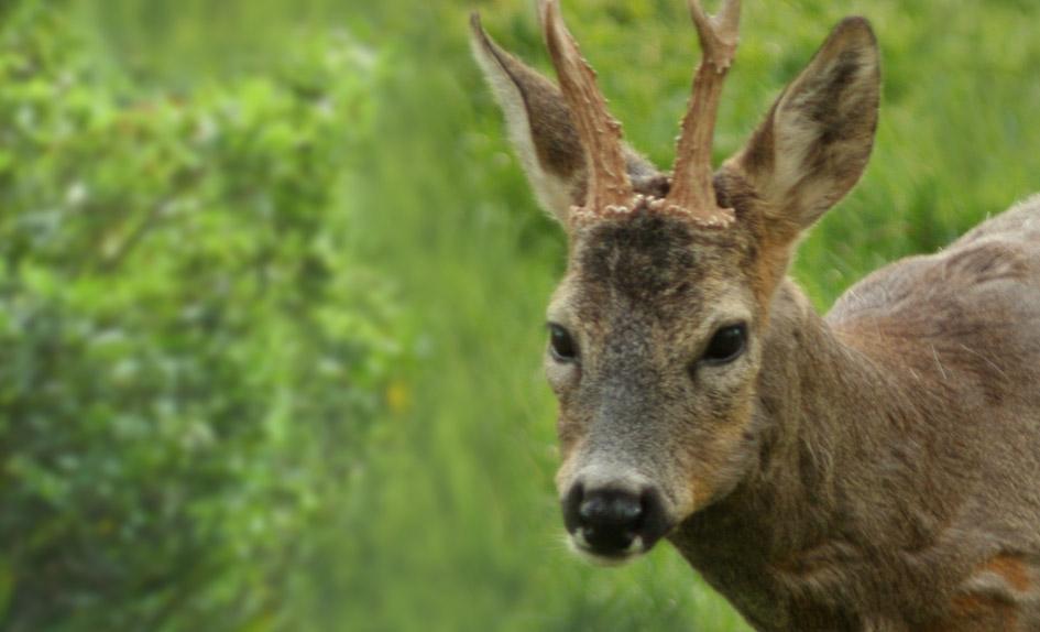El próximo 14/02/2018 quedará cerrada la caza en la Val d'Aran